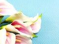 Beautiful Calla Lily Flower On...