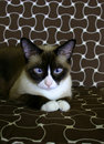 Beautiful cat (2) Royalty Free Stock Photo
