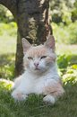 Beautiful cat lying in the grass hiding from the summer heat in portrait of a shade of a tree Stock Image
