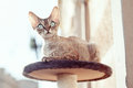 Beautiful cat sitting on the scratching post Royalty Free Stock Photo