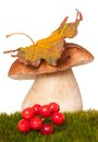 Beautiful cepe on a green moss focus on the mushrooms cap Stock Photography