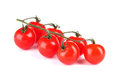 Beautiful cherry tomatoes on a branch Stock Photos