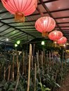 Beautiful Chinese Lantern Ligh...