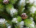 Beautiful Christmas tree green needles covered with snow and natural pine cones. Artificial spruce branch for decoration New Year Royalty Free Stock Photo