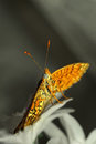 Beautiful close up with butterfly nice soft and pastel background Royalty Free Stock Photo