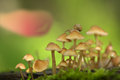 Beautiful close up with snail and mushrooms Royalty Free Stock Photo