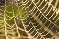 A beautiful closeup of a spider web in marsh. Web with water droplets in morning light. Royalty Free Stock Photo