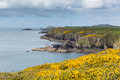 Beautiful coast wales path pembrokeshire uk near from caerfai bay to st non s bay in the national park towards ramsey island Stock Photos
