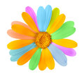 Beautiful colored flower on white background Royalty Free Stock Photography
