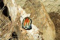 Beautiful colored scarab on the tree Royalty Free Stock Photo