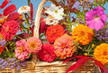 Beautiful colorful autumn flowers Stock Images