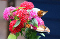 Beautiful colorful buddlei flowers for butterflies Royalty Free Stock Photos