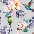 Beautiful colorful colibri and plumeria flowers on gray background. Exotic tropical seamless pattern. Watecolor painting.