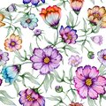 Beautiful colorful cosmos flowers with leaves on white background. Seamless floral pattern. Watercolor painting.