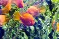 Beautiful colorful fish in the aquarium