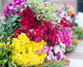 Beautiful colorful flower for sale Stock Images