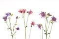 Beautiful Colorful Flowers Aqu...