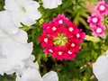 Beautiful colorful flowers on the nature background Royalty Free Stock Photo