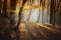 Beautiful colorful forest in autumn on an day Royalty Free Stock Photography