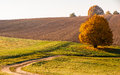 Beautiful and colorful landscape taken in late autumn Royalty Free Stock Image