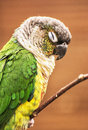 Beautiful colorful parrot resting on the tree branch bird scene beauty in nature animal portrait vertical composition Royalty Free Stock Photo