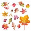 Beautiful colourful autumn leaves isolated
