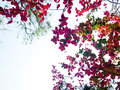 Beautiful colourful leaves in autumn time on gradient white sky Royalty Free Stock Photo