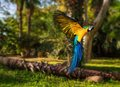 Beautiful colourful parrot over tropical background Stock Photos