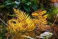 Beautiful Common Fern. Lush Orange Leaves. Autumn Colors. Bright Autumnal Background. Dry Rusty Yellowed Autumn Leave