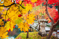 beautiful conlorful maple leaf vibrant tree in Japan travel autumn season, Japan Royalty Free Stock Photo