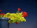 Beautiful contrast of red and green and blue picture a flower with Royalty Free Stock Photos