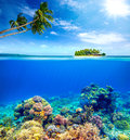 Beautiful Coral Reef On The Ba...