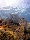 A beautiful coral reef scene Royalty Free Stock Photos