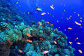 Beautiful coral reef Royalty Free Stock Photo