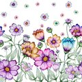 Beautiful cosmos flowers with green leaves on white background. Seamless floral pattern. Watercolor painting.