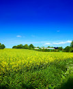 Beautiful countryside - Denmark Royalty Free Stock Photography