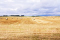 Beautiful countryside landscape. Round straw bales in harvested fields Royalty Free Stock Photo