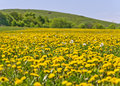 Beautiful countryside landscape in transylvania with green grass and dandelions Stock Images