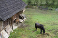 Beautiful countryside scene in romania romanian with horse and foal grazing green grass near a wooden house Stock Image