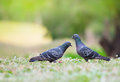 Beautiful couple bird in the natural park Stock Image