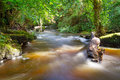 Beautiful creek of clare glens co limerick ireland Royalty Free Stock Photography