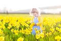Beautiful curly toddler girl field of yellow daffodil flowers in a blue dress playing in a on a sunny summer evening Stock Image