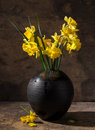 Beautiful Daffodils In Black V...