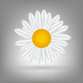 Beautiful  Daisy icon vecotr illustration Stock Images