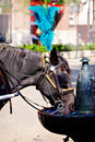 Beautiful dark brown horse with blue feather hat drinking from fountain in downtown Chicago. Royalty Free Stock Photo