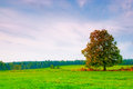 Beautiful deciduous tree in a field Royalty Free Stock Photography