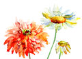 Beautiful decorative flowers watercolor illustration Stock Image