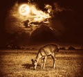 Beautiful deer graze among sky with bright full moon and dark cl Royalty Free Stock Photo