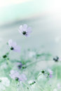 Beautiful defocus blur tender pastel flowers background with floral art design Stock Photos