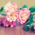 Beautiful delicate pink rose on wooden background toned style close up Royalty Free Stock Photos
